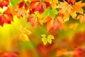 herfst3